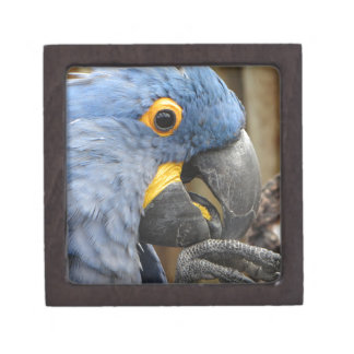 Hyacinth Macaw Parrot Jewelry Box