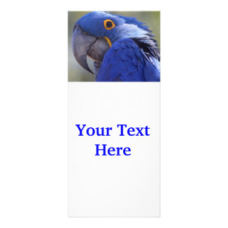Hyacinth Macaw Personalized Rack Card