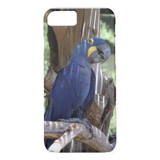 hyacinth macaw phone cover