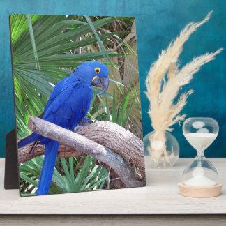 Hyacinth Macaw Display Plaque
