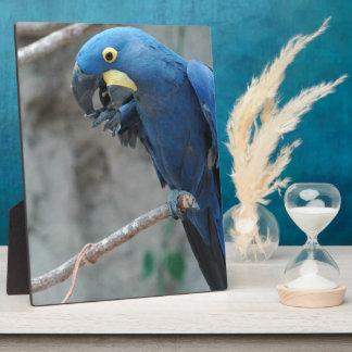 Hyacinth Macaw Plaque