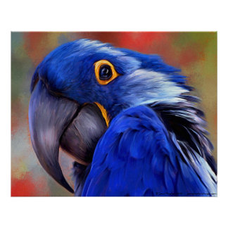 Hyacinth Macaw Posters