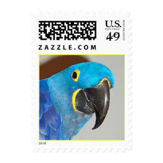 Hyacinth Macaw (Small) Postage Stamps