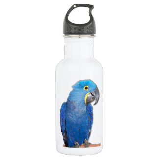 Hyacinth Macaw Stainless Steel Water Bottle