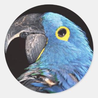 Hyacinth Macaw Round Stickers