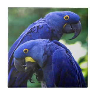 Hyacinth Macaws Tiles