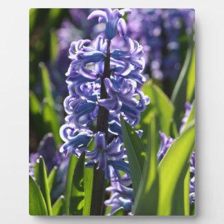 Hyacinth Display Plaques