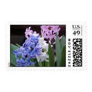 Hyacinth Postage Stamp