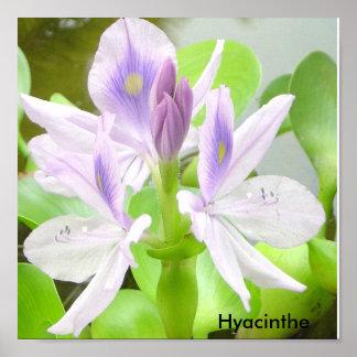 Hyacinthe Poster