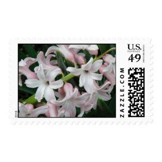 Hyacinths Postage Stamp