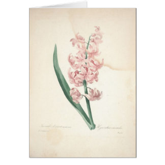 Hyacinthus Orientalis by Redoute Sympathy Card