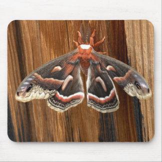 Hyalophora cecropia moth mouse pad