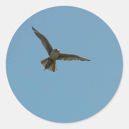 hybrid falcon round stickers