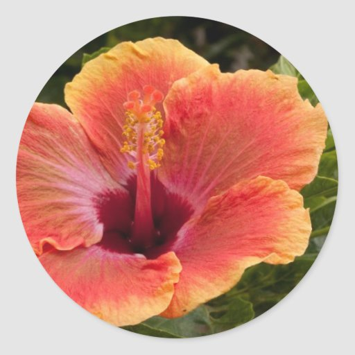 Hybrid Hibiscus Sticker