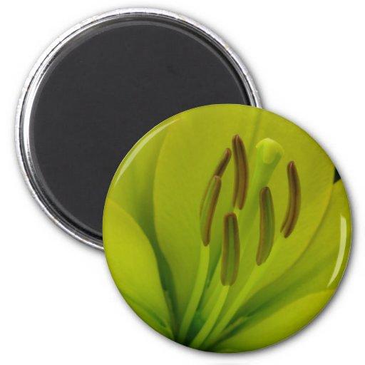 Hybrid Lily named Trebbiano 2 Inch Round Magnet