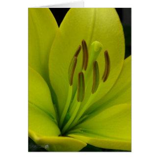 Hybrid Lily named Trebbiano Card