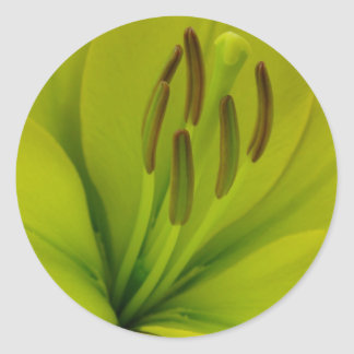 Hybrid Lily named Trebbiano Classic Round Sticker