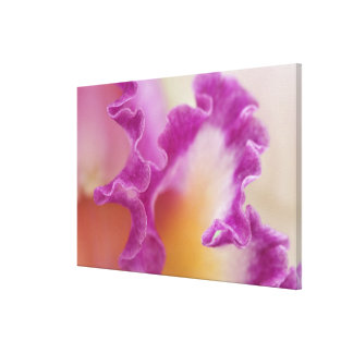 Hybrid orchid close-up, Delray Beach, Florida Canvas Print