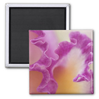 Hybrid orchid close-up, Delray Beach, Florida 2 Inch Square Magnet