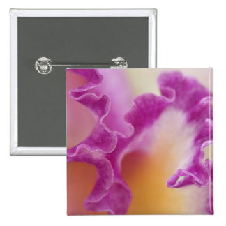 Hybrid orchid close-up, Delray Beach, Florida Pinback Button