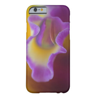 Hybrid orchid, Florida Barely There iPhone 6 Case