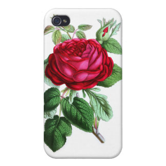Hybrid Perpetual Rose, Lord Napier Cover For iPhone 4
