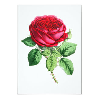 Hybrid Perpetual Rose - Napoleon III Card