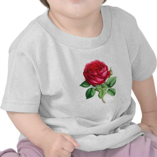 Hybrid Perpetual Rose - Napoleon III Tee Shirts