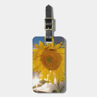 Hybrid sunflower blowing in the wind at dusk bag tag