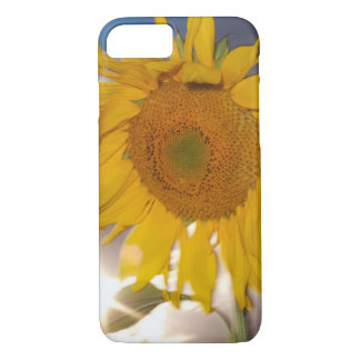 Hybrid sunflower blowing in the wind at dusk iPhone 7 case