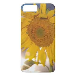 Hybrid sunflower blowing in the wind at dusk iPhone 7 plus case