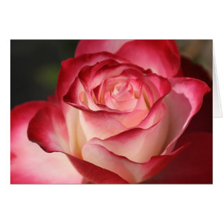 Hybrid Tea Rose Card