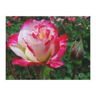 Hybrid Tea Rose Double Delight On Canvas