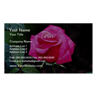Hybrid Tea Rose 'First Prize' White flowers Double-Sided Standard Business Cards (Pack Of 100)