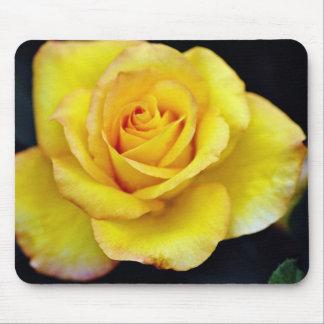 Hybrid Tea Rose  flowers Mouse Pad