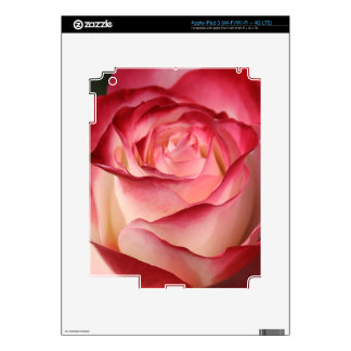 Hybrid Tea Rose iPad 3 Skin