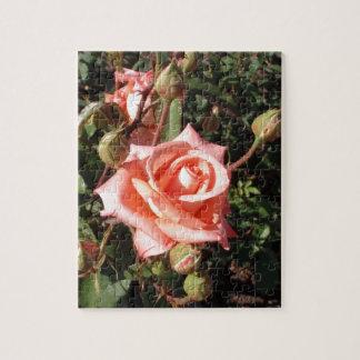Hybrid Tea Rose Jigsaw Puzzles