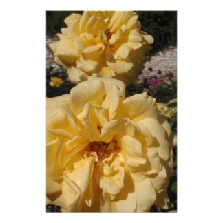 Hybrid Tea Rose Landora Stationery