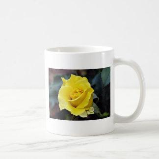 Hybrid Tea Rose 'Lanvin' White flowers Classic White Coffee Mug