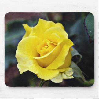 Hybrid Tea Rose Lanvin White flowers Mouse Pads