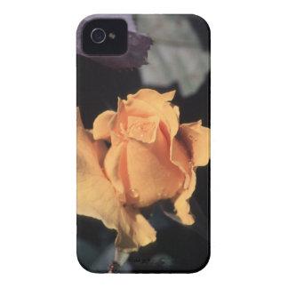Hybrid Tea Rose Midas Touch Case-Mate iPhone 4 Case