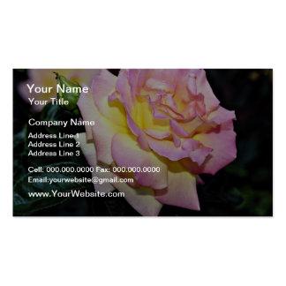 Hybrid Tea Rose Peace White flowers Business Cards