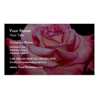 Hybrid Tea Rose 'Sheer Elegance' White flowers Business Cards