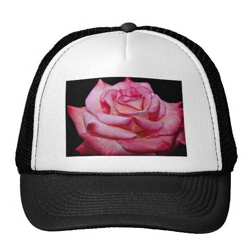 Hybrid Tea Rose 'Sheer Elegance' White flowers Mesh Hats