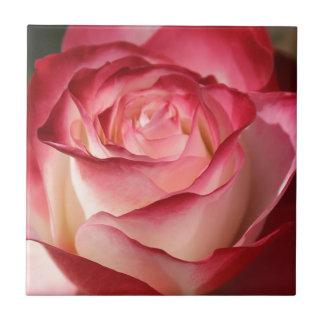 Hybrid Tea Rose Small Square Tile