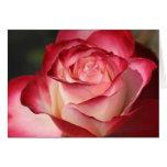 Hybrid Tea Rose Stationery Note Card