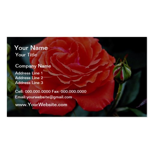 Hybrid Tea Rose White flowers Double-Sided Standard Business Cards (Pack Of 100)
