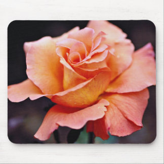 Hybrid Tea Rose White flowers Mouse Pad