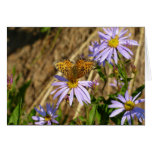Hydaspe Fritillary on Purple Aster Flowers Card