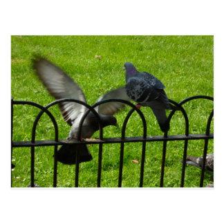 Hyde Park London Postcard